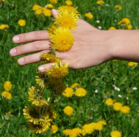 Hand and flowers